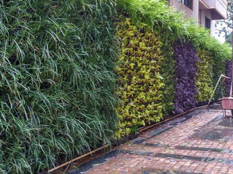 Vertical Garden by Shailesh Nursery