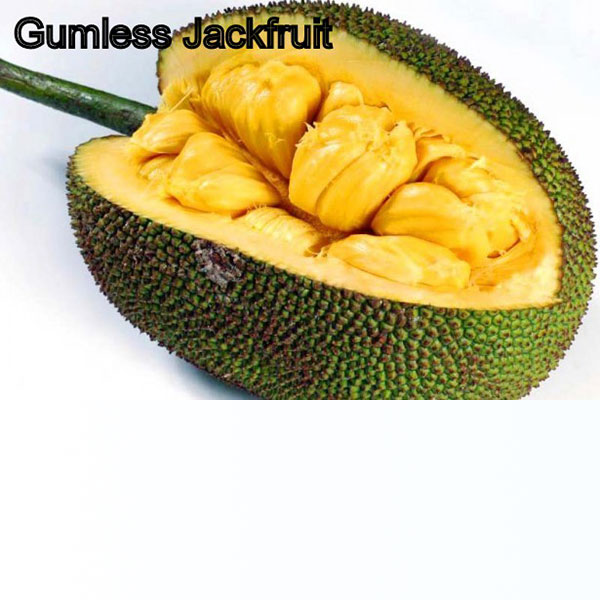 Gumless Jackfruit