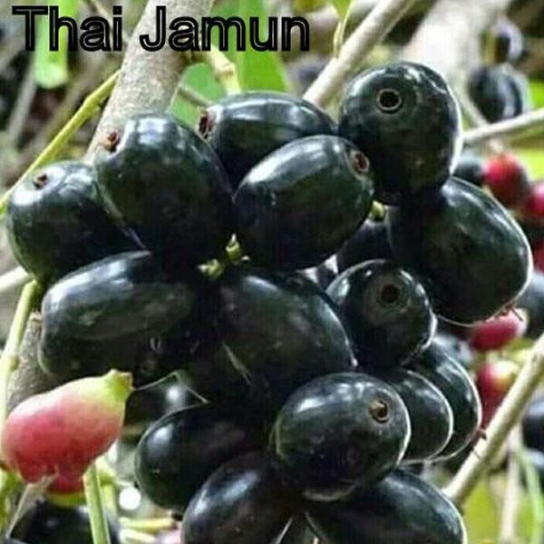 Thai Jamun